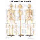 Anatomical Chart - The Skeletal System (Flexible Lamination)